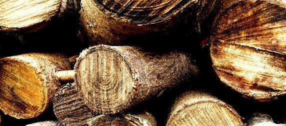 cut lumber pile