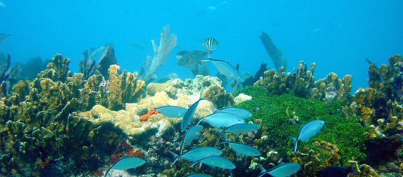 a school of fish swimming in front of a coral reef