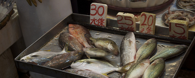 fish for sale in a Hong Kong market