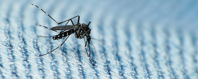mosquito on a blue striped fabric