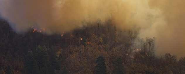 smoke and fire seen among a forested area from the air