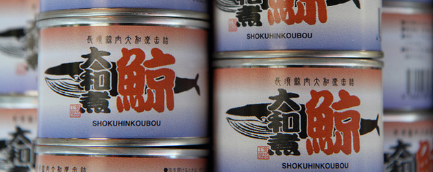 canned whale meat, with Japanese label.