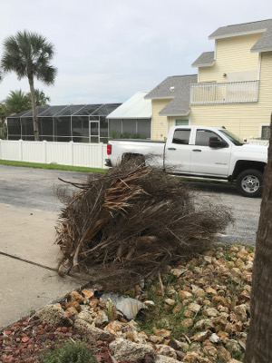 palm fronds downed by Hurricane Dorian.
