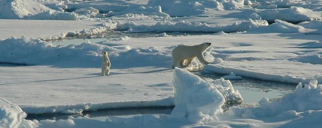 polar bear and cub in the Arctic, on the Beaufort Sea (Alaska).