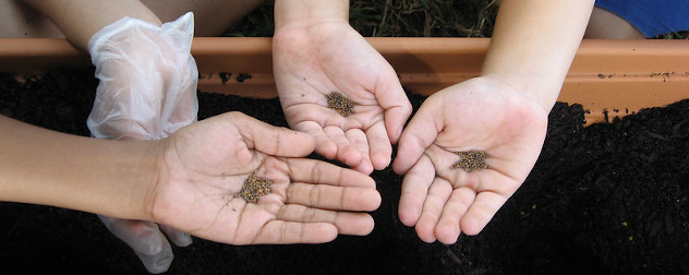 small hands holding seeds over dirt.