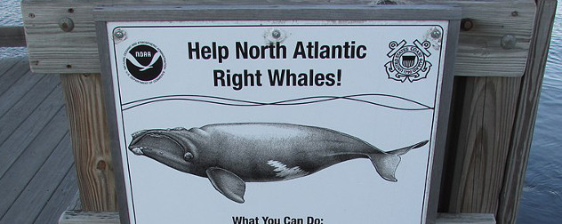 sign on dock reading 'Help North Atlantic Right Whales' with an illustration of a right whale.
